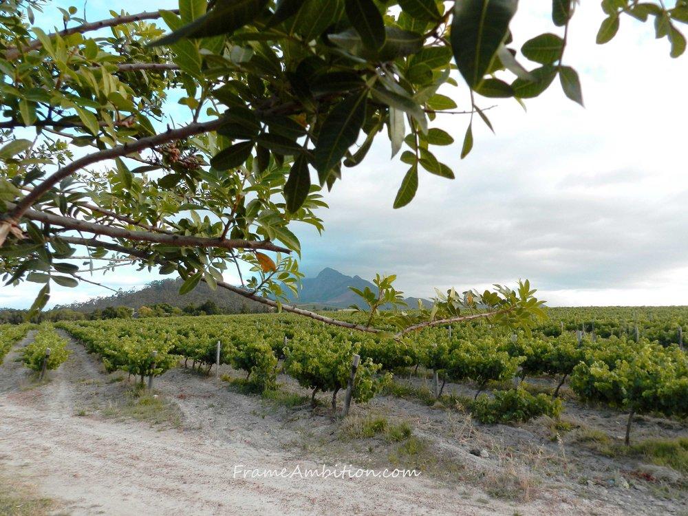 cape_winelands_mountain_scenery_vineyards