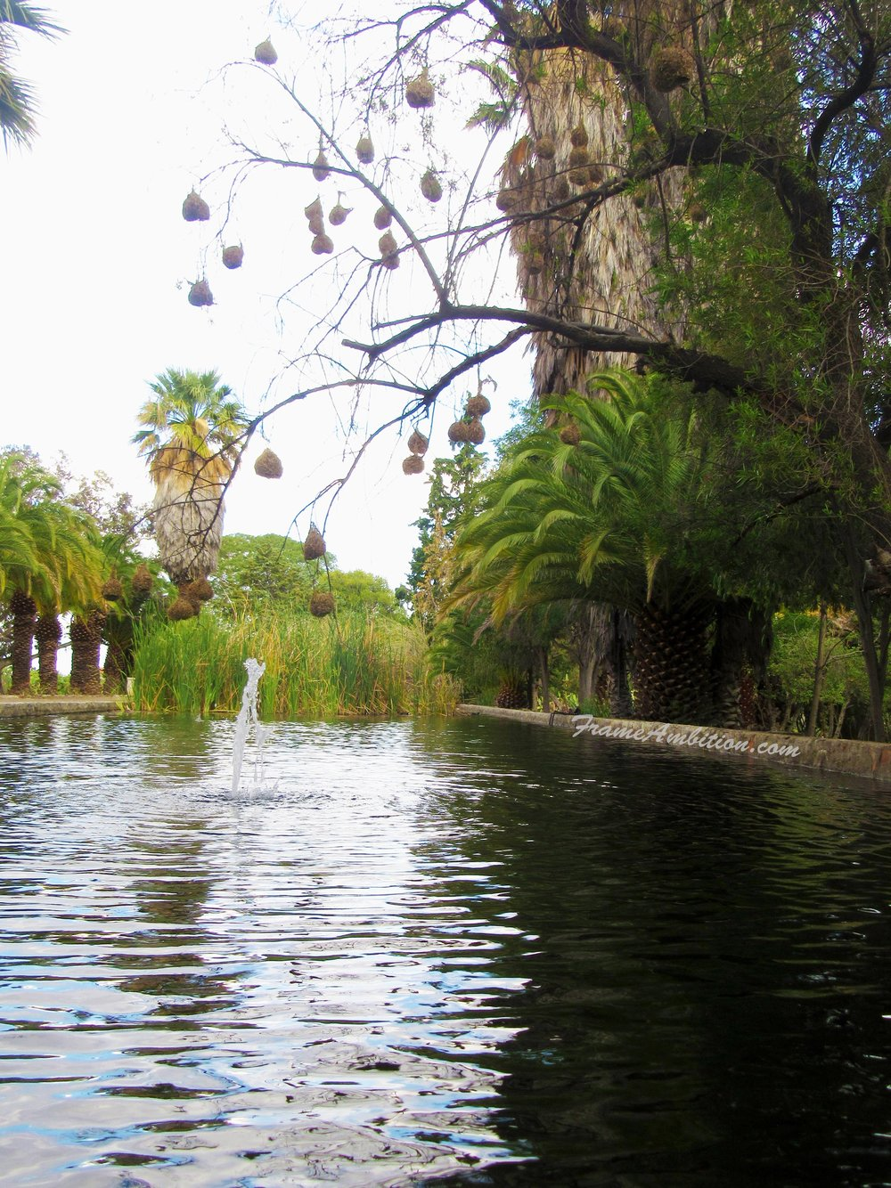 palm-trees-pond