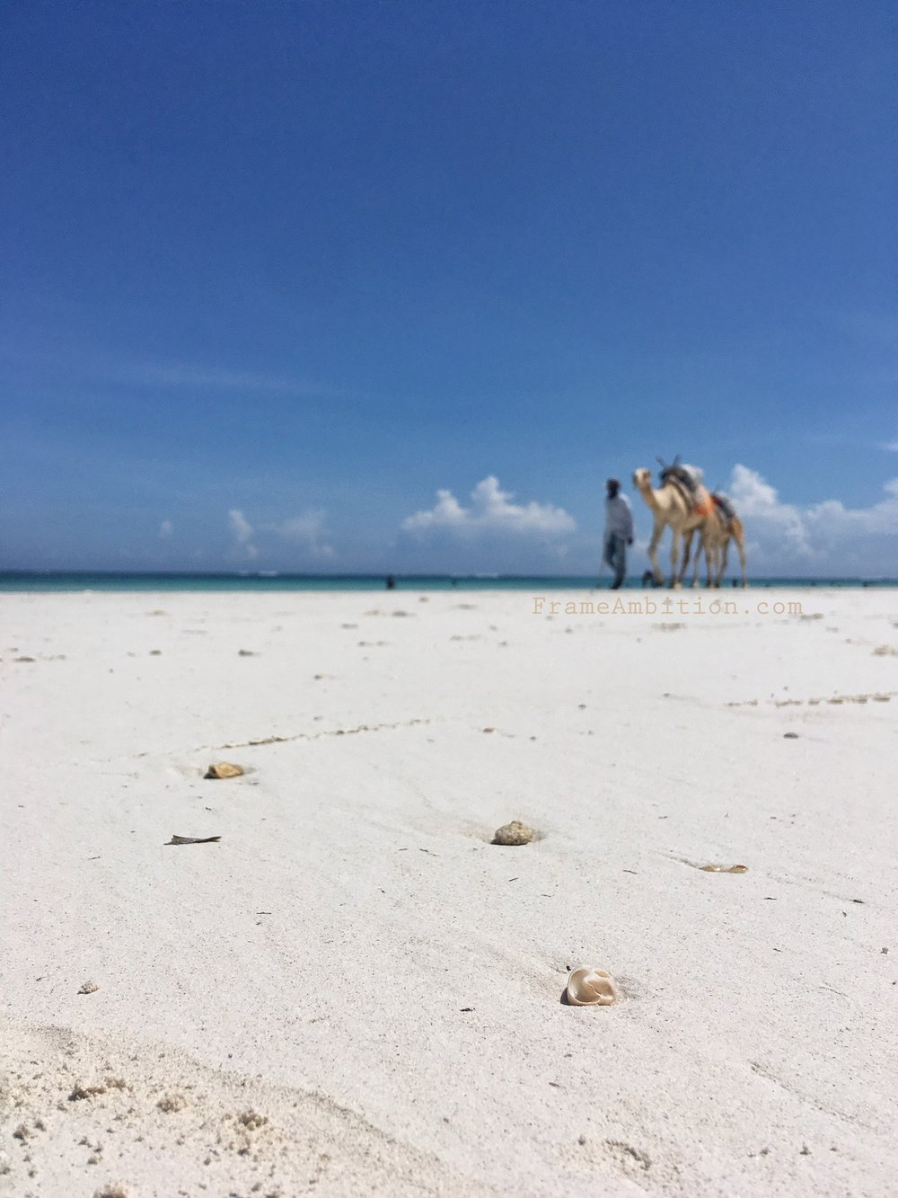 diani_beach_camels_frame_ambition.jpg