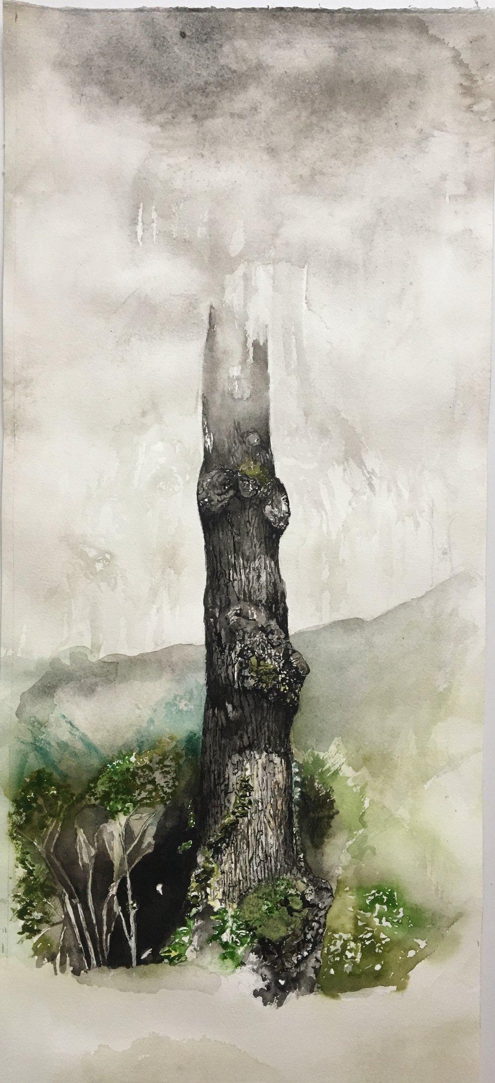 Tree & Rain Cloud