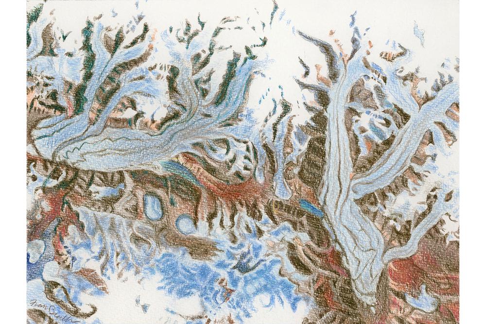 Frilled Glacier
