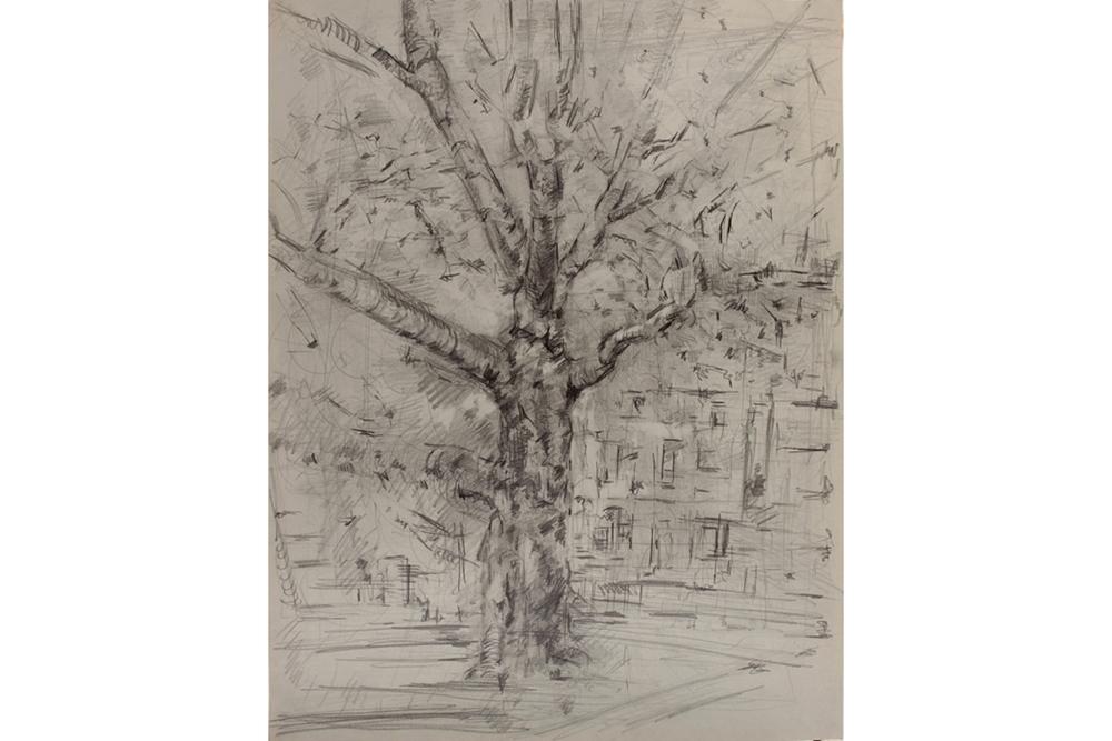 Tree, McCarren Park