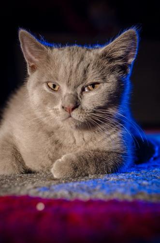 Pukkika, the koolest kat in town!