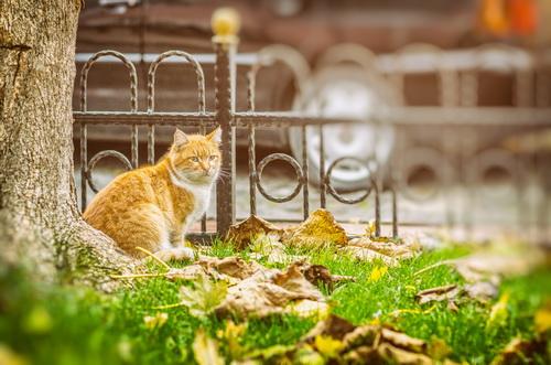 """""""Uneori stau și meditez la soarta mea pisicească... câți porumbei n-am fugărit.... câți șoricei n-am prigonit..."""