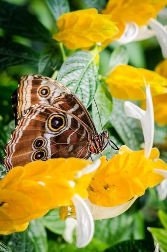 Un fluture fotografiat fără obiectiv dedicat sau aparatură specială
