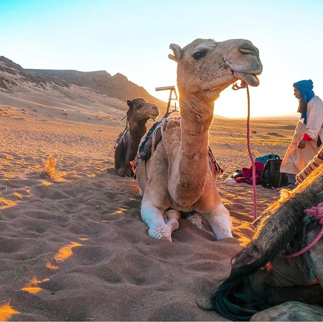 Took a few weeks away from social media to try and be more present during the holidays this year 🥳 but I'm back babyyyy  I've been in Morocco since the 26th and was lucky enough to spend NYE with camels, Berber dancers, a giant bonfire and cake this year. Happy belated New Year!!!
