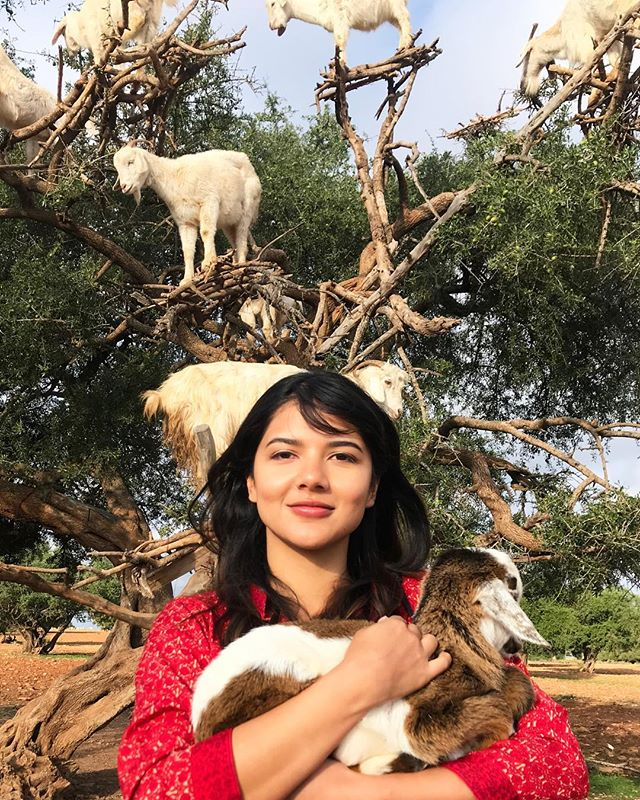 On our way to Essaouria we found some goats feasting on the fruit of Argania trees...it might be the best thing that happened to me in Morocco! 😜