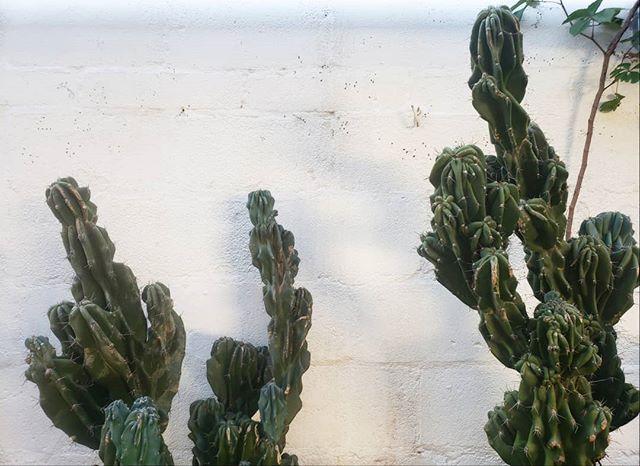 My hometown has a new hidden jungle gem! 🌵 . . . #plants #plantsofinstagram #indoorgreen #concrete #interiorwilding #pottery #plantsmakepeoplehappy #urbanjunglebloggers #moldmaking #nature #houseplantclub #climbing #bouldering #casting #botanicalpickmeup #propagation #ceramics #plantgoals #houseplants #greenthumb #horticulture #cactus #succulents #sculpture #stylingwithplants #makersgonnamake #indoorplants #plantstrong #plantstagram #plantsarefriends