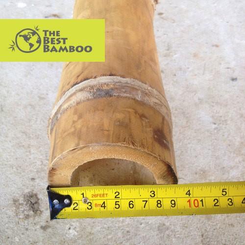 3''-4''/8 -10 cm Guadua Bamboo Pole