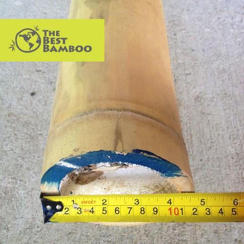 4''-5'' /10 -12 cm Guadua Bamboo Pole