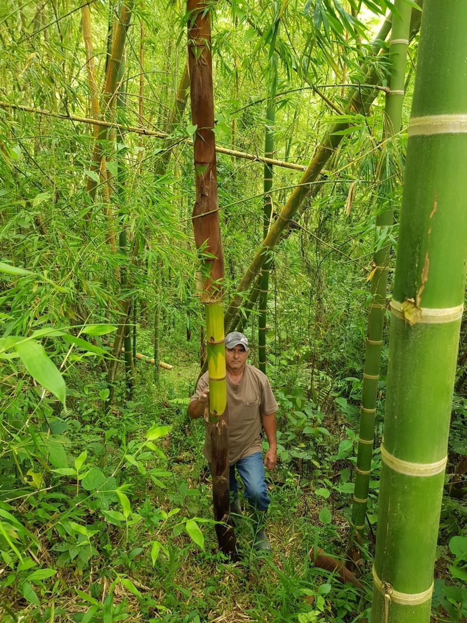 Oscar Ruiz - Agricultural Engineer