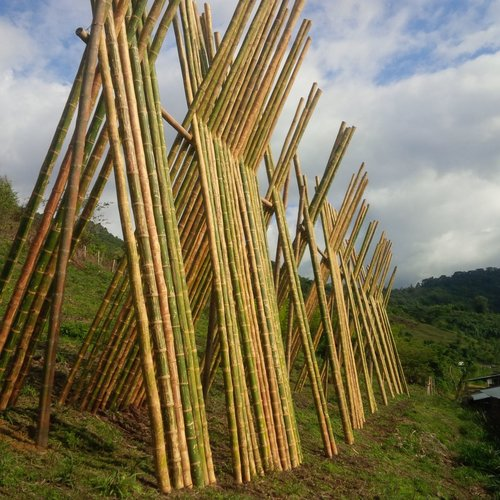 The Best Bamboo — Bamboo Poles for Sale — Bamboo Farms for Sale