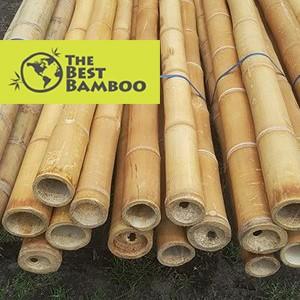 tribamboo1.jpg