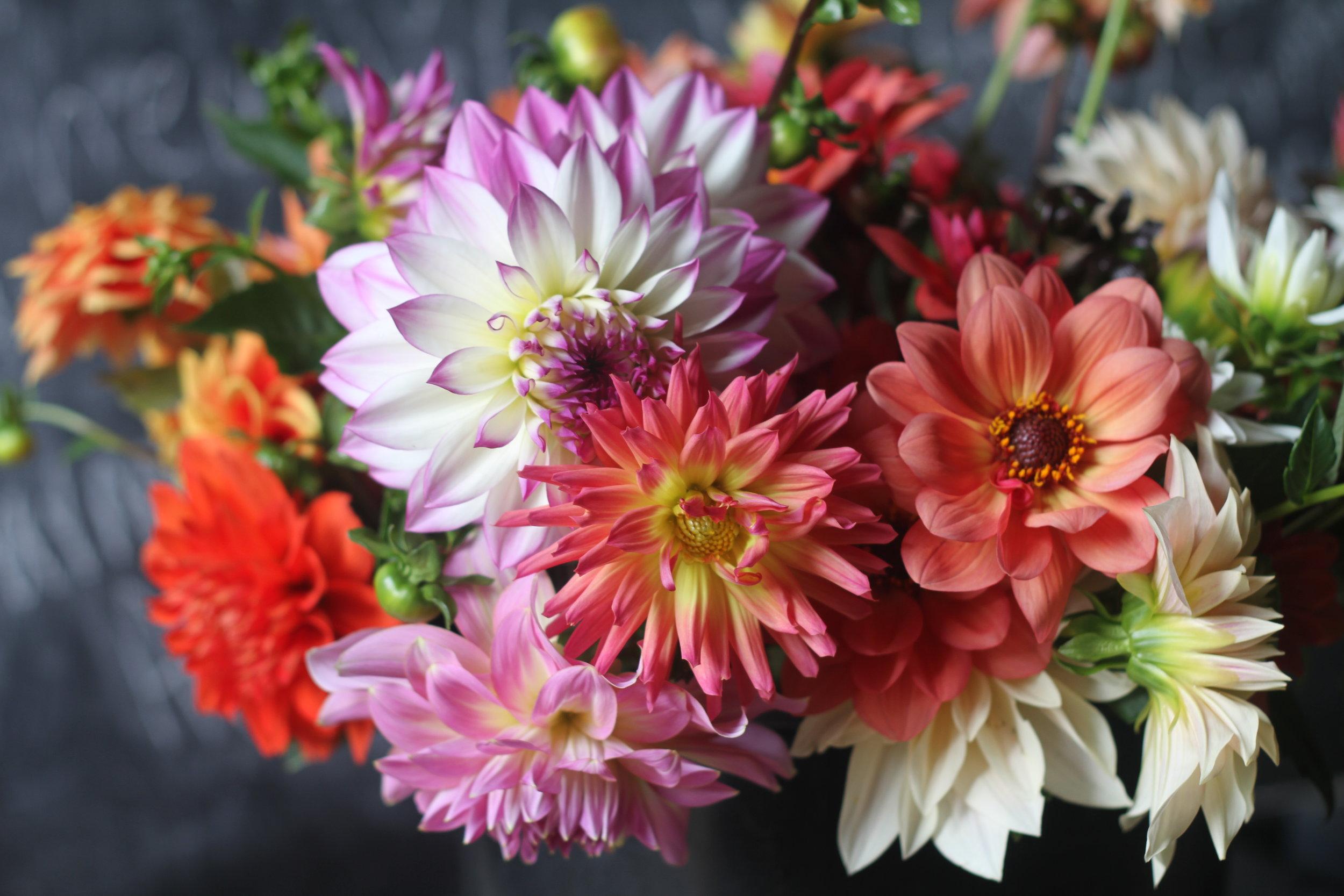 diana mae flowers