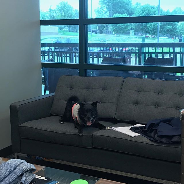 It's #bringyourdogtowork day at McNamara! . . . . . . . Say hello to Molly! Molly belongs to our principal attorney, Patrick McNamara. She is a terrier-collie mix with a love of legal briefs! #dogsofinstagram #officespace #tuesdaymorning #supportdogs #lawyerlife #lawyersdohavefun #instaworthy #instawork #omahalawgroup #mcnamaralawfirm