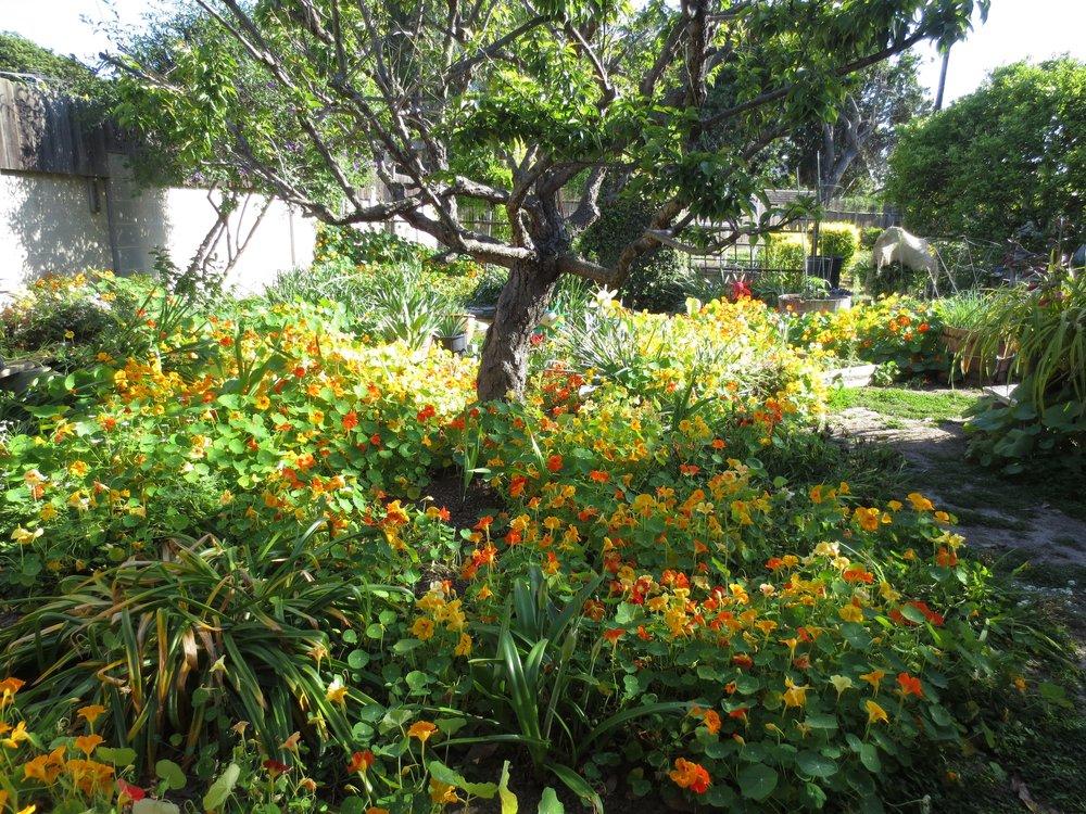 Grandma Yoko's garden in Spring