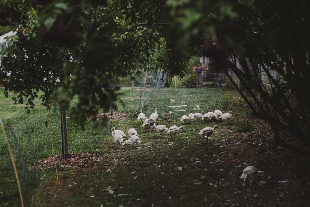 LIBERTY_VIEW_FARM_HIGHLAND_NY_WEDDING_CHELLISE_MICHAEL_PHOTOGRAPHY729.JPG