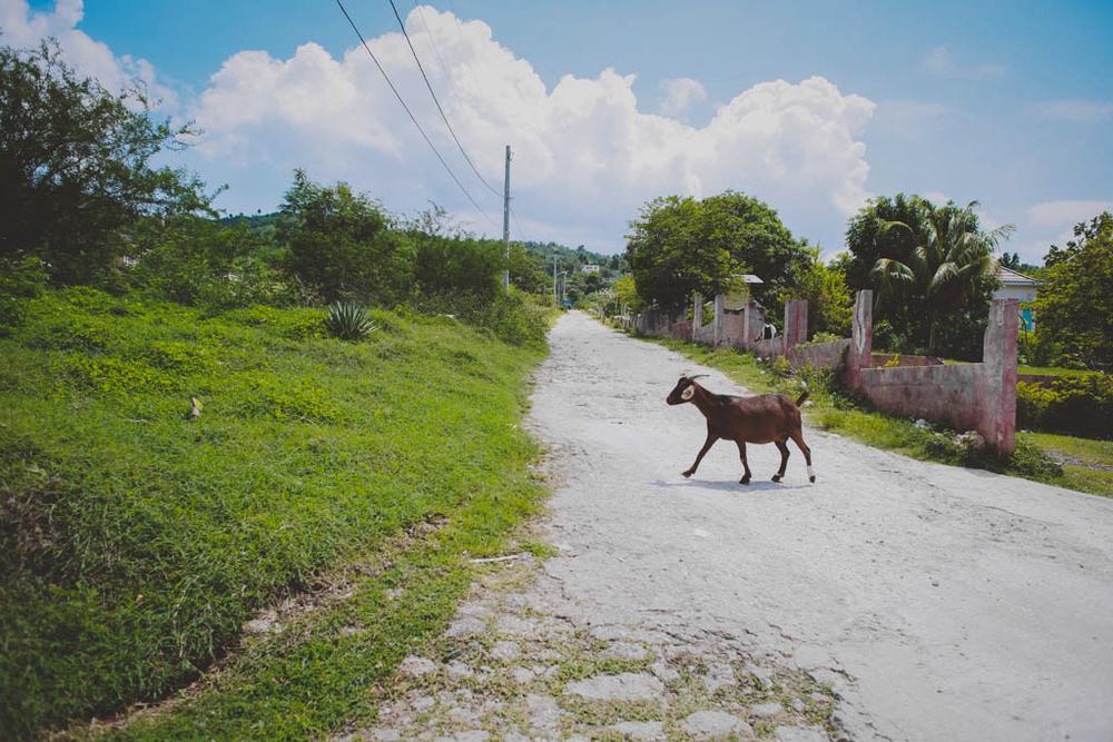 negril jamaica montego bay tensing pen black river chellise michael photography-127.jpg