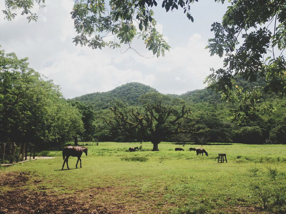 negril jamaica montego bay tensing pen black river chellise michael photography-146.jpg