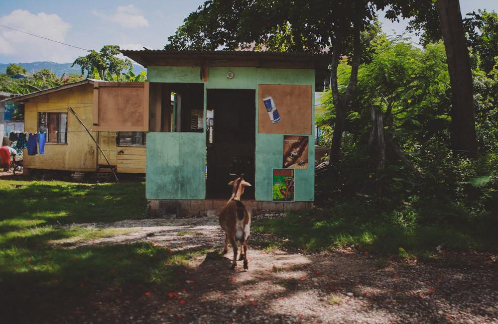 negril jamaica montego bay tensing pen black river chellise michael photography-140.jpg
