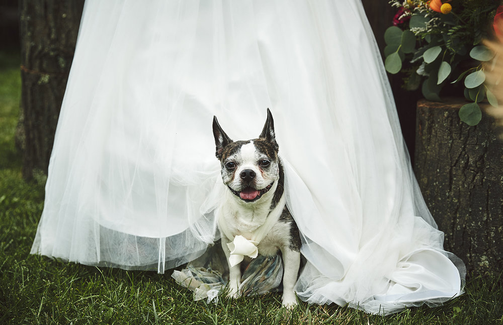 170722_Pennsylvania_RusticBackyardWedding_By_BriJohnsonWeddings_0028.jpg