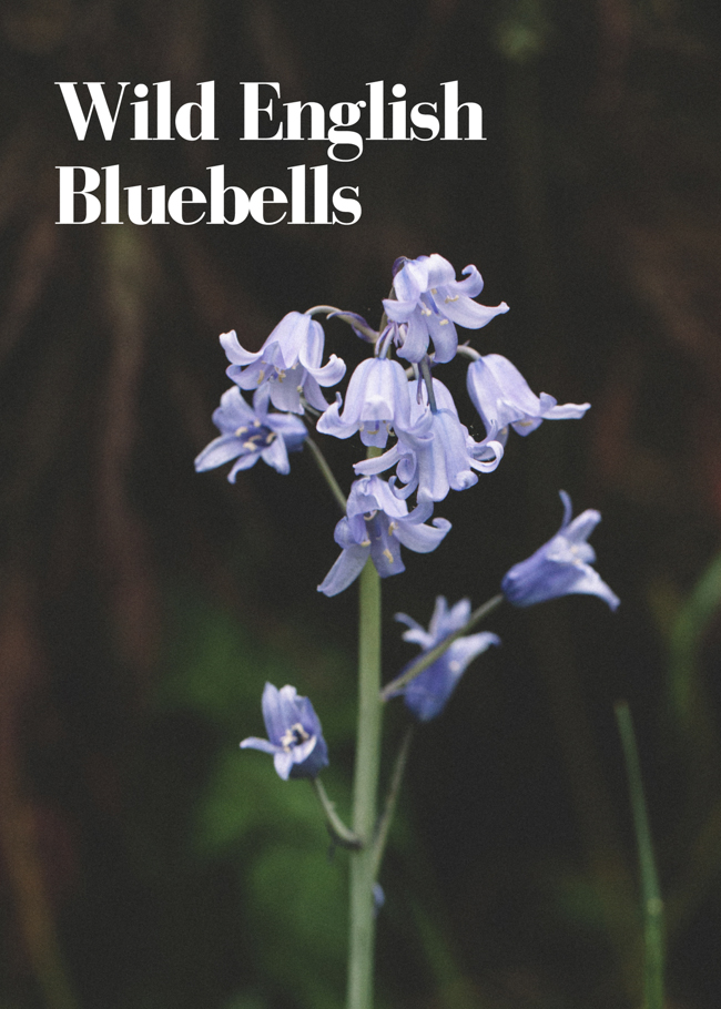 Wild English Bluebells by © Honest Magazine