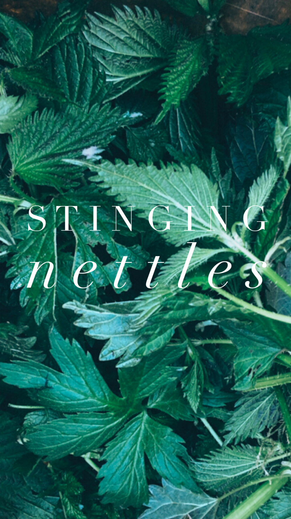 Gathering stinging nettles and other things to cook