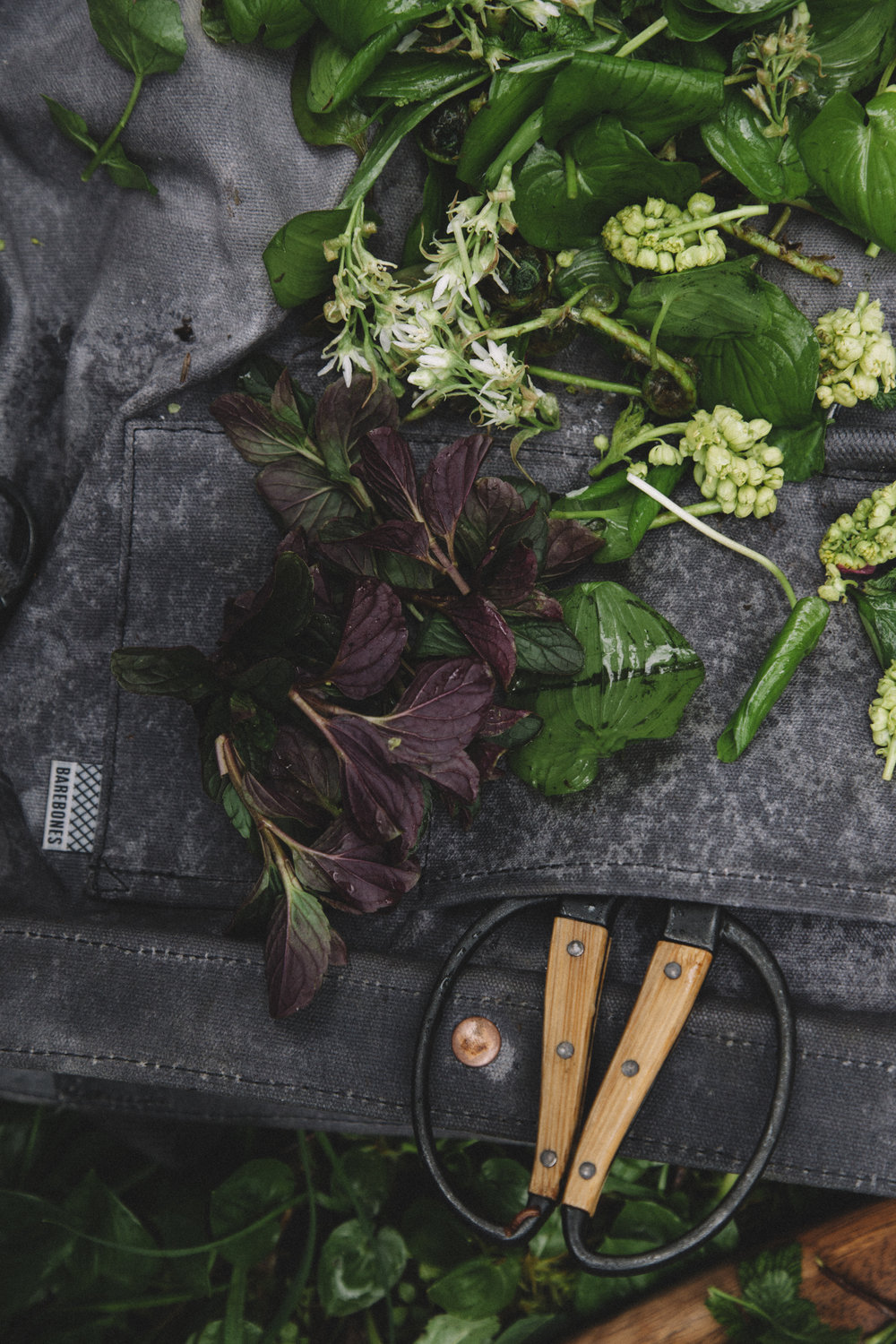 What to Forage