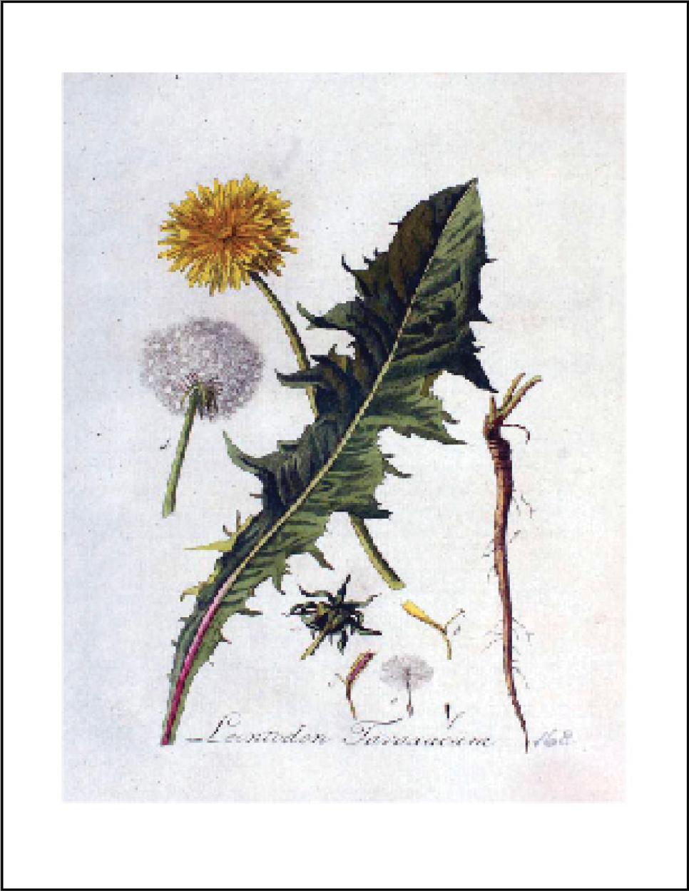 """Wild Greens & Herbs"" -"