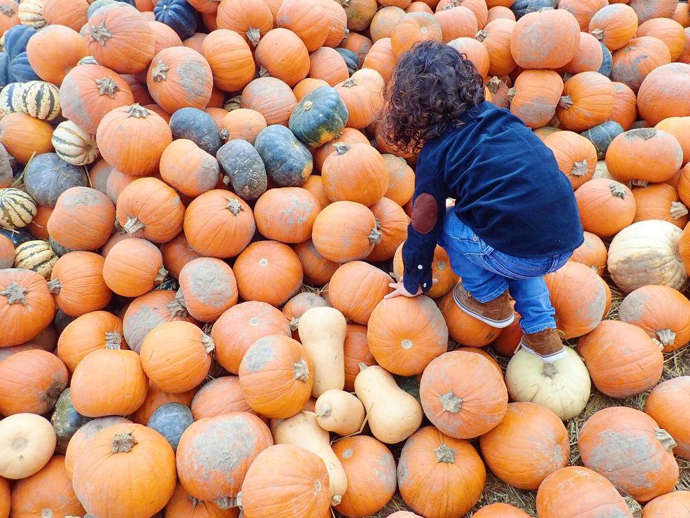 Pumpking-Picking-Fun.jpg