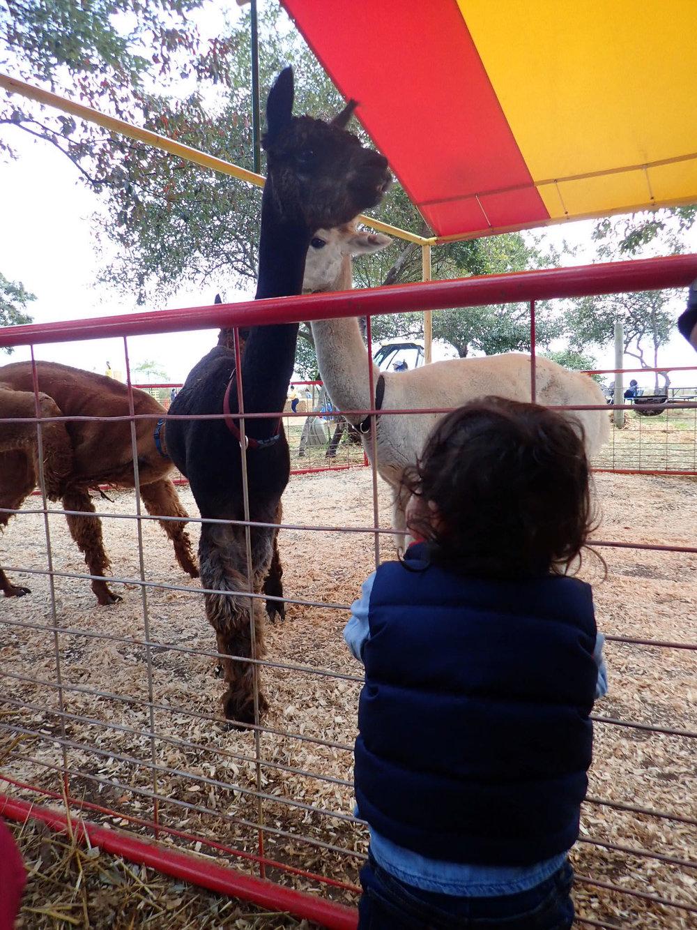 Llama-Llama-farm-fun.jpg