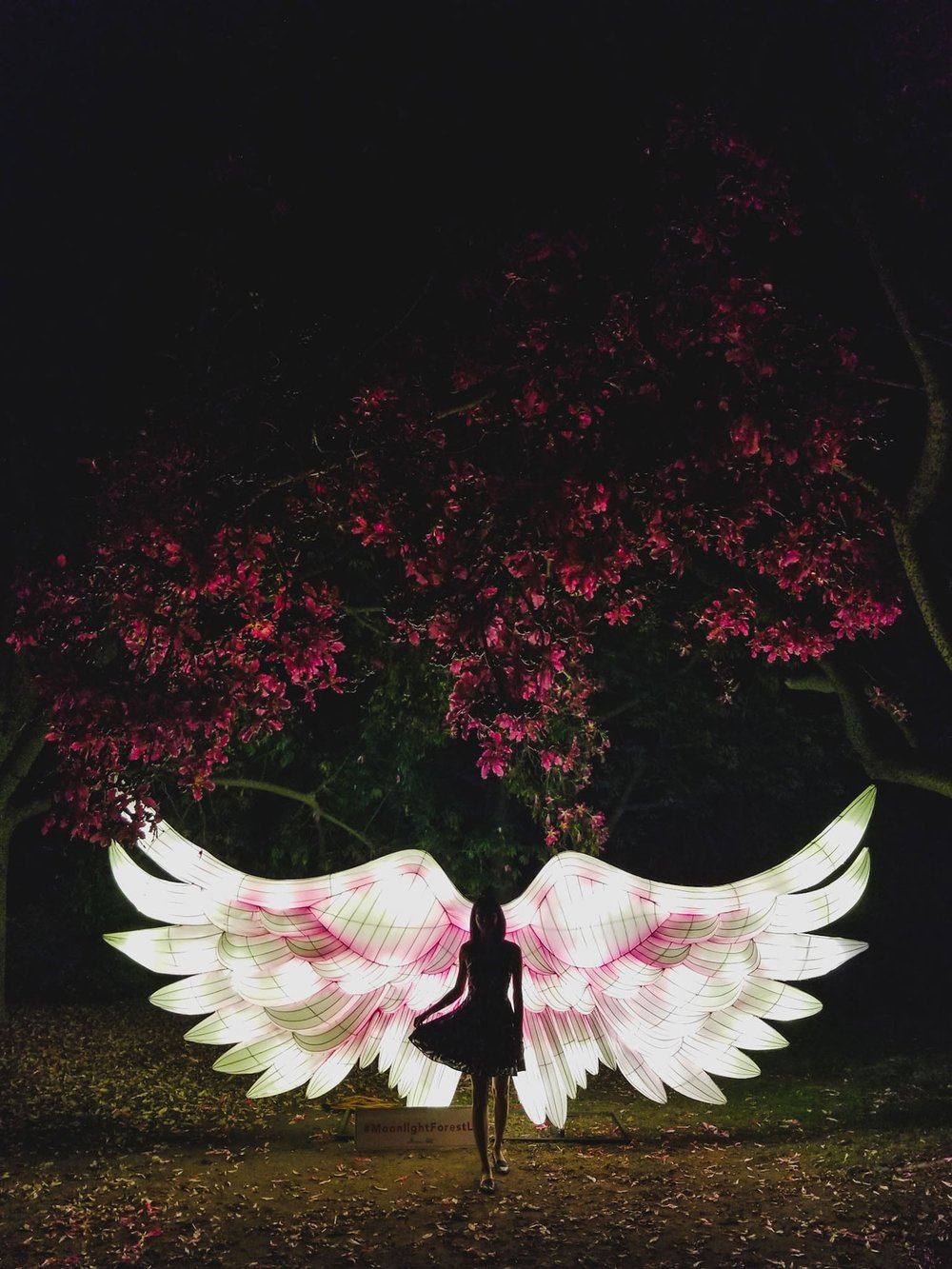 angel wings.jpg