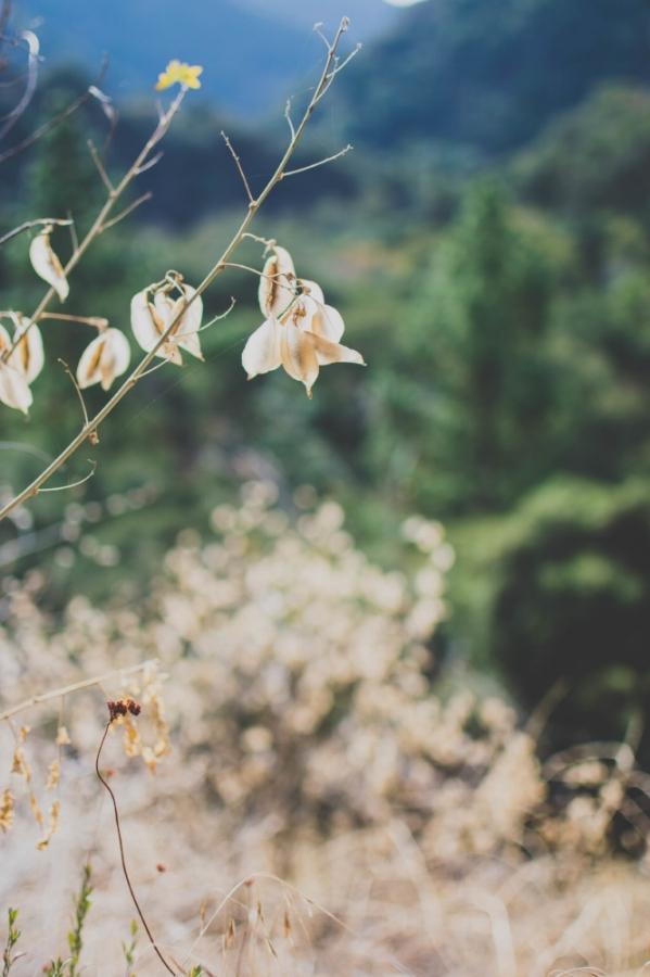 Sturtevant Falls Trail plants