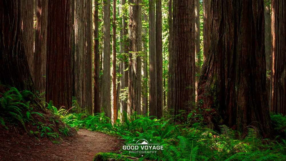 _0017_redwoodspath.png