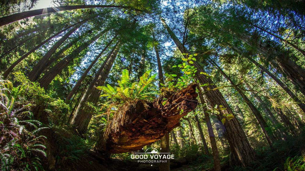 _0016_redwoodslog.png