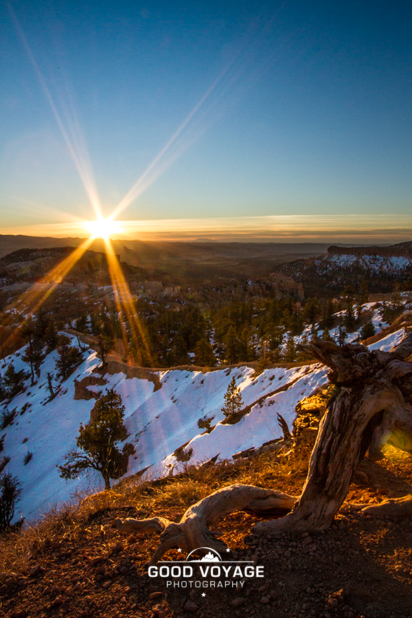 Morning in Bryce