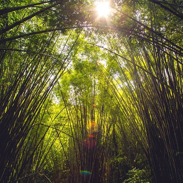 #sunlight  breaking through.. #bambootemple #bambooforest #khaosok #jungle  #cambodia