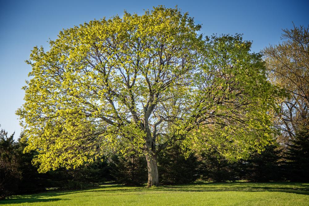 Tree_150422_0002.jpg
