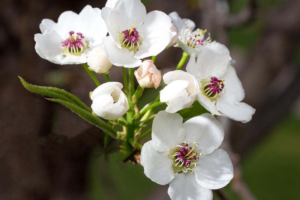 Spring_150417_0074.jpg