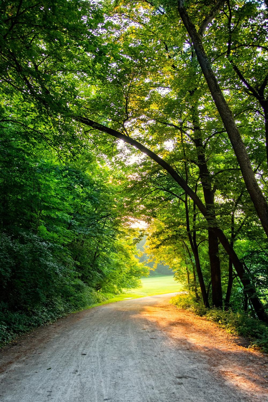 Walk_150710_0052.jpg