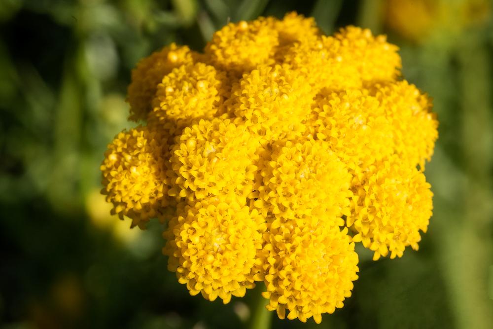 Flowers_150824_0031.jpg