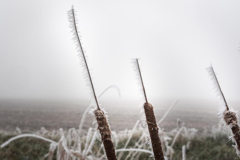 Frost-7509404.jpg