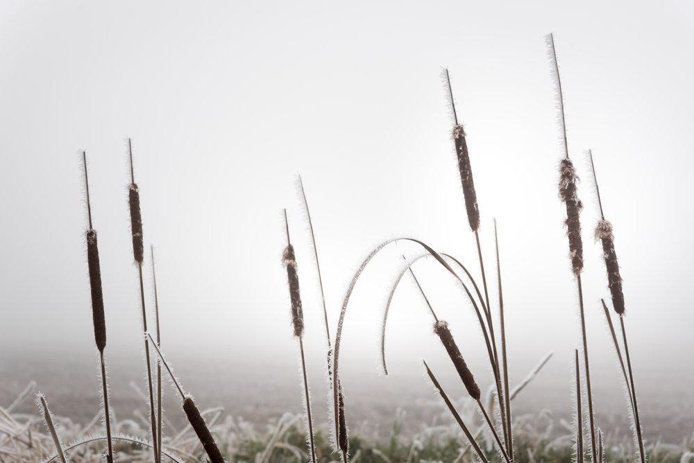 Frost-7509420.jpg