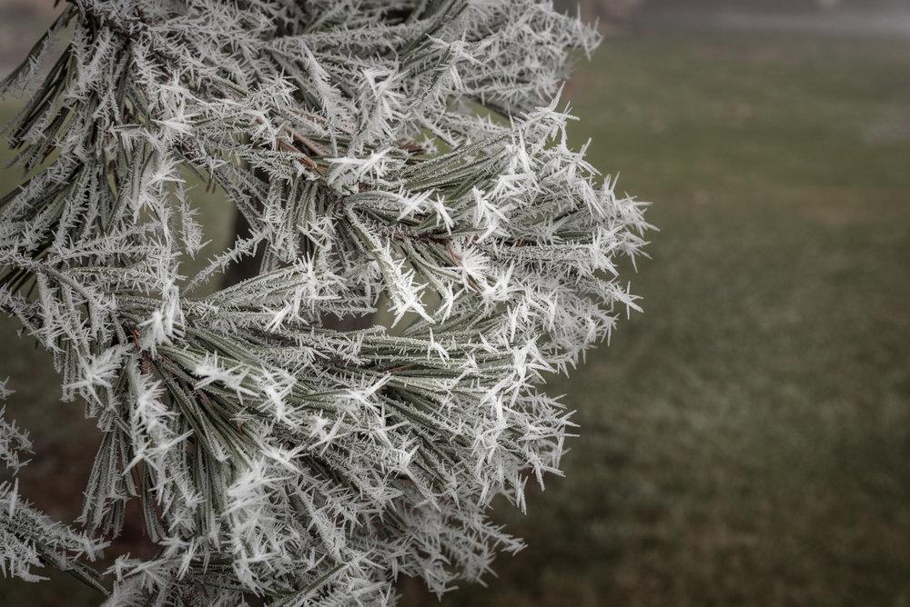 Frost-7509480.jpg