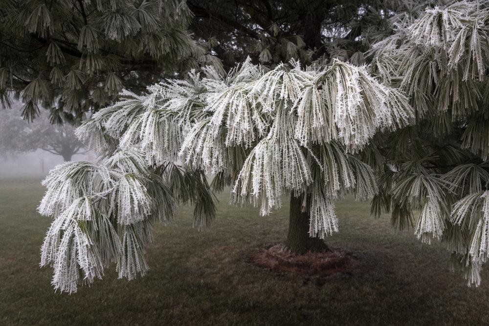 Frost-7509506.jpg