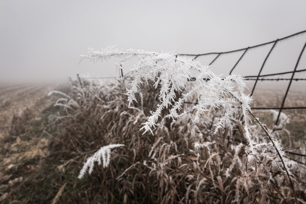 Frost-7509538.jpg