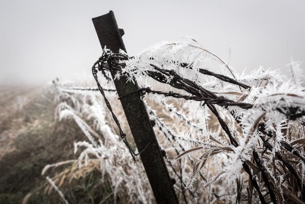 Frost-7509570.jpg