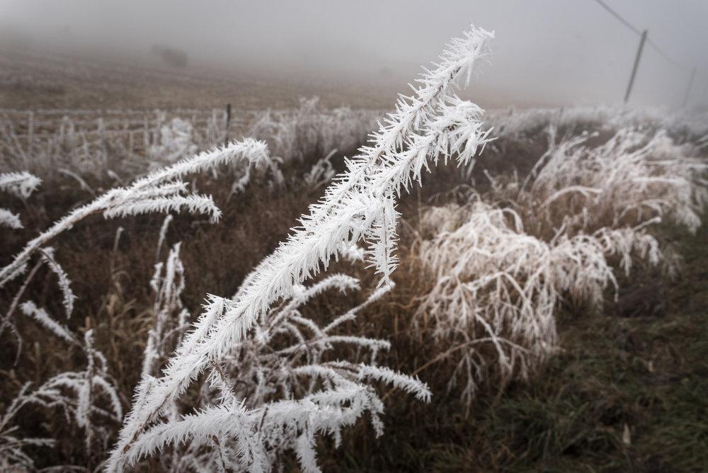 Frost-7509625.jpg