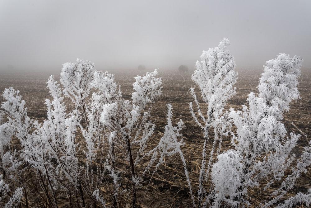 Frost-7509648.jpg