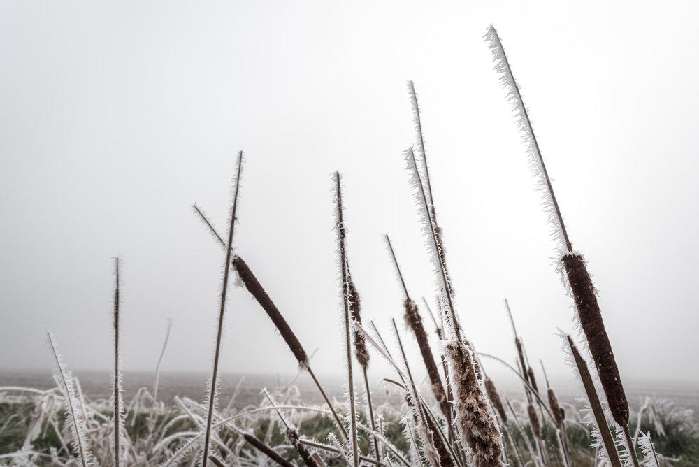 Frost-7509398.jpg